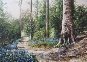 Blue bell forest by jamesgreen
