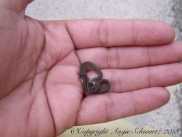 Baby DeKay's Brown Snake by AngieSchwartz