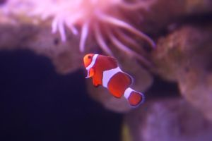 I Found Nemo by ce3Design