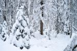 Tree in the snow by Lubov2001