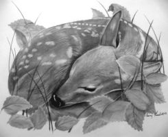 sleeping fawn by kissel71