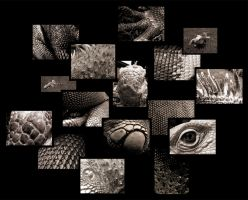iguana collage by schwa-boy