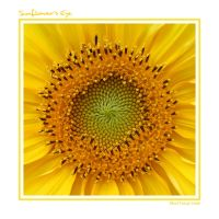 Sunflower's Eye by SoundAnarchist
