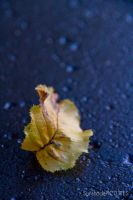 lonely yellow leaf by SunshadePICTURES