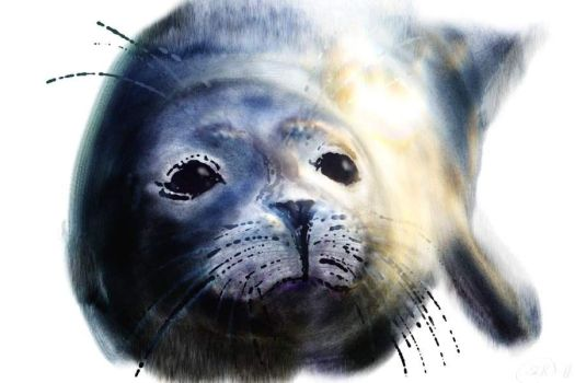 Young Seal by frankensusan