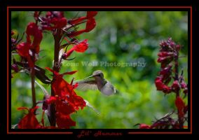 Lil' Hummer by LoneWolfPhotography