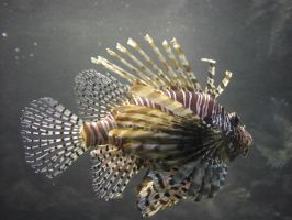 lb1-58 Lion Fish by bstocked