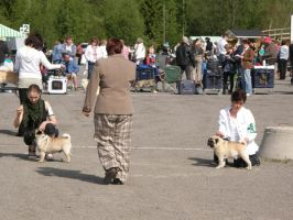 :Dog show- with judge: by pimeydenmorsian