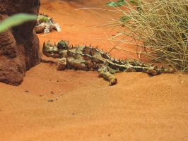 Thorny Devil by LloydG