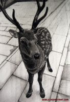 Todaiji Deer by doidle