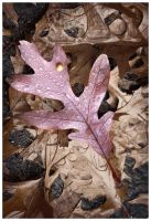 A Leaf on The Driveway by tCentric-media