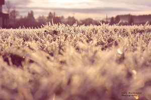 Morning Frost by kentmacdonald