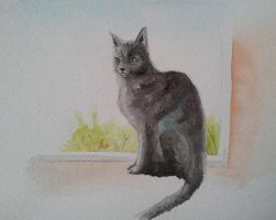 Hexe cat on the window, quick painting by BecciES
