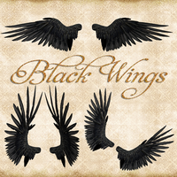 Premium Black Wings by Just-A-Little-Knotty