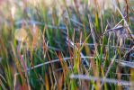 Grass near the ocean by 90DEnise