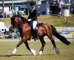 STOCK - Gold Coast Show 367 by fillyrox