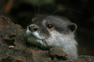 otter by scoot75