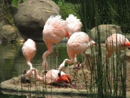 Flamingos 1 by ChristineMarieArt