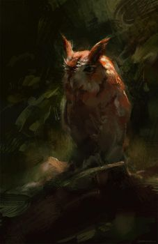 Owl by Wildweasel339