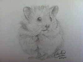 Hamster by kyun-chan