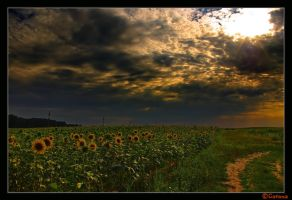 Romania - Summer dreams by christian-alexandru