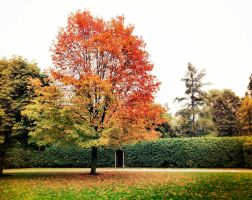 Fall Tree by Jaylr18