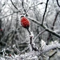 winteR reD natUre by WiKkASs
