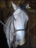 Watchung Stables Horse: Earl by Icegoddesswolf16