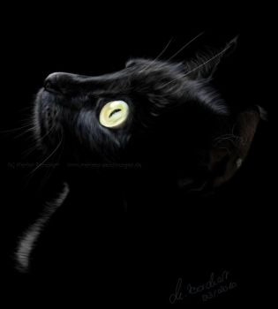 Black cat II by WitchiArt