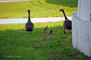 the gosling 11 by photom17