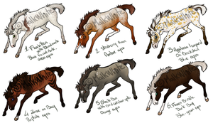 Point Adoptable Foals Set by Malk-White