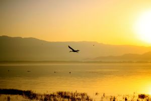 Dojran morning by CoffeeField