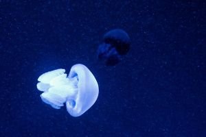 Jelly Fish by feria233