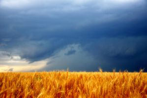 Tempestuous Times for Wheat by Bvilleweatherman
