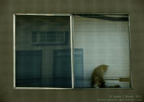 Cat Behind Window by skinsvideos21