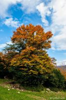 Autumn in Nebrodi mountains.24 by rebelblues
