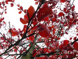 Red Red Leaves by feathereyelashes
