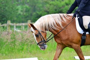 Dressage Stock 012 by HKW1994