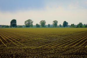 New crops lined up by jochniew