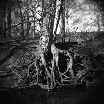 Southdale Woods - Tree Roots by Eilwynn