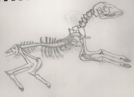 Deer Skeleton by katriel