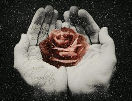 Rose in hands by EHilsdonPhotography