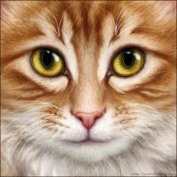 Orance and White Cat by Wynnyelle