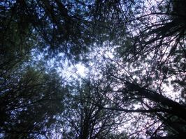 Neath the Treetops by canamerica88