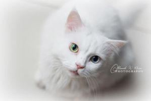 Colored eye cat by ahmedwkhan