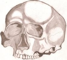 Skull by Lord-Vincent