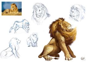 Sketchs Lion by OliviaMorganXXI