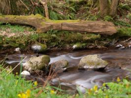 Flowing by ChessW24