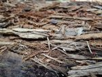 Texture: rotten wood by LeTrefle