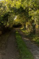 Small Country Lane 2 by AcridMonkry